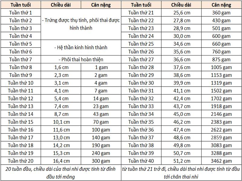 Bảng cân nặng thai nhi theo tuần chuẩn WHO mới nhất