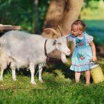 Sữa dê nga phù hợp với trẻ nhỏ