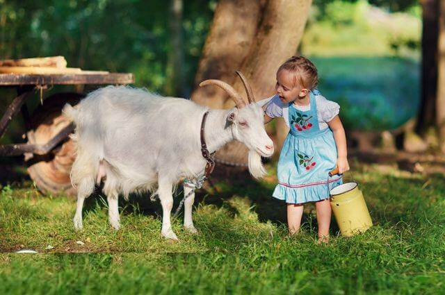 Sữa dê kabrita có tốt không, có phù hợp với trẻ nhỏ