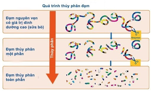 Hình ảnh về đạm thủy phân trong sữa pregestimil lipil